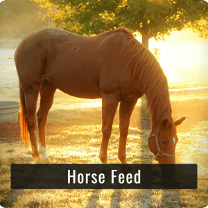 Horse Feeds