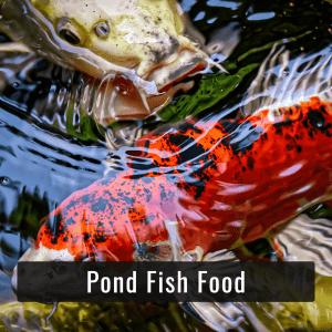 Pond Fish Food