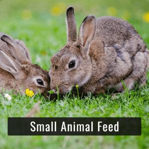 Small Animal Foods